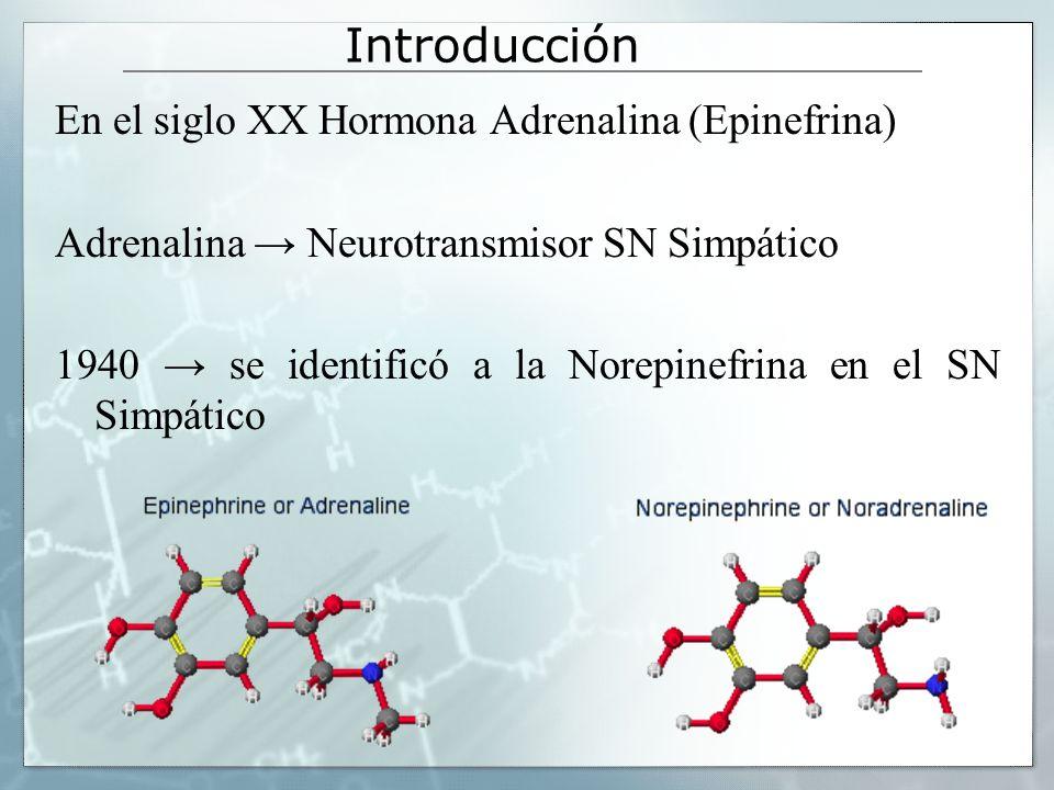 Introducción En el siglo XX Hormona Adrenalina (Epinefrina) Adrenalina Neurotransmisor SN Simpático 1940 se identificó a la Norepinefrina en el SN Sim