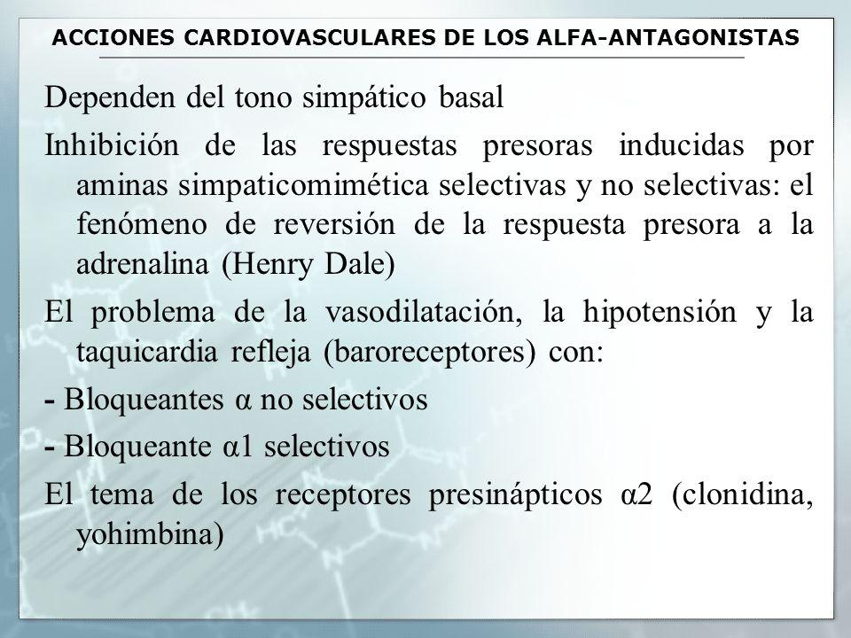 ACCIONES CARDIOVASCULARES DE LOS ALFA-ANTAGONISTAS Dependen del tono simpático basal Inhibición de las respuestas presoras inducidas por aminas simpat