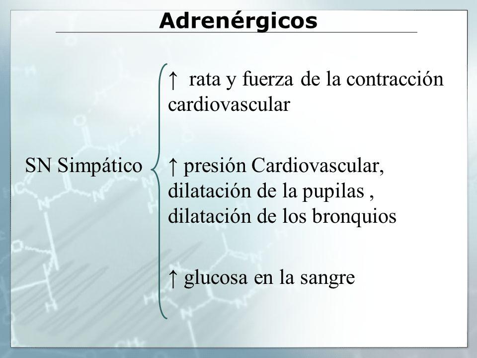 Adrenérgicos rata y fuerza de la contracción cardiovascular SN Simpático presión Cardiovascular, dilatación de la pupilas, dilatación de los bronquios