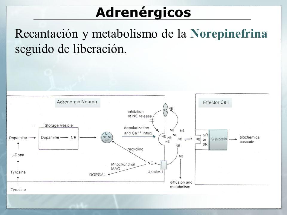 Adrenérgicos Recantación y metabolismo de la Norepinefrina seguido de liberación.