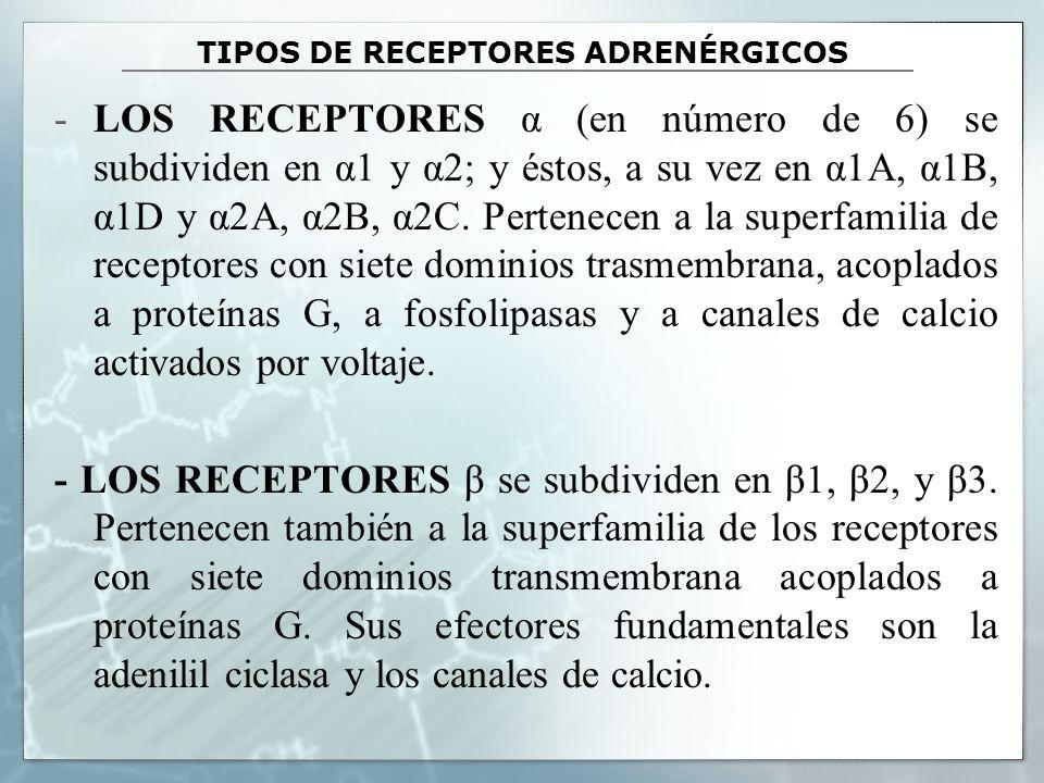 TIPOS DE RECEPTORES ADRENÉRGICOS -LOS RECEPTORES α (en número de 6) se subdividen en α1 y α2; y éstos, a su vez en α1A, α1B, α1D y α2A, α2B, α2C. Pert