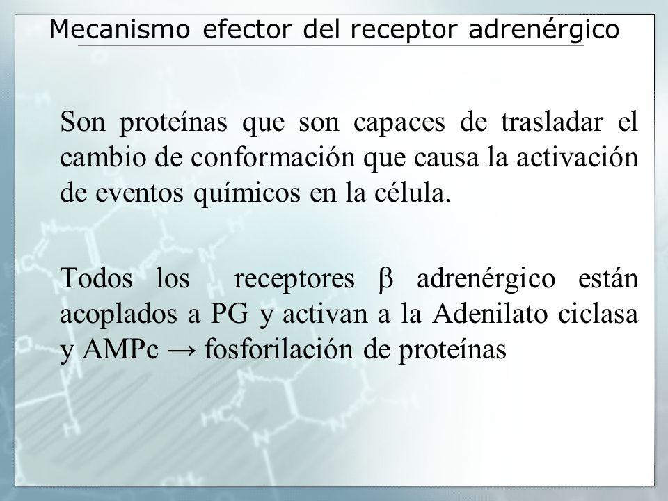 Mecanismo efector del receptor adrenérgico Son proteínas que son capaces de trasladar el cambio de conformación que causa la activación de eventos quí