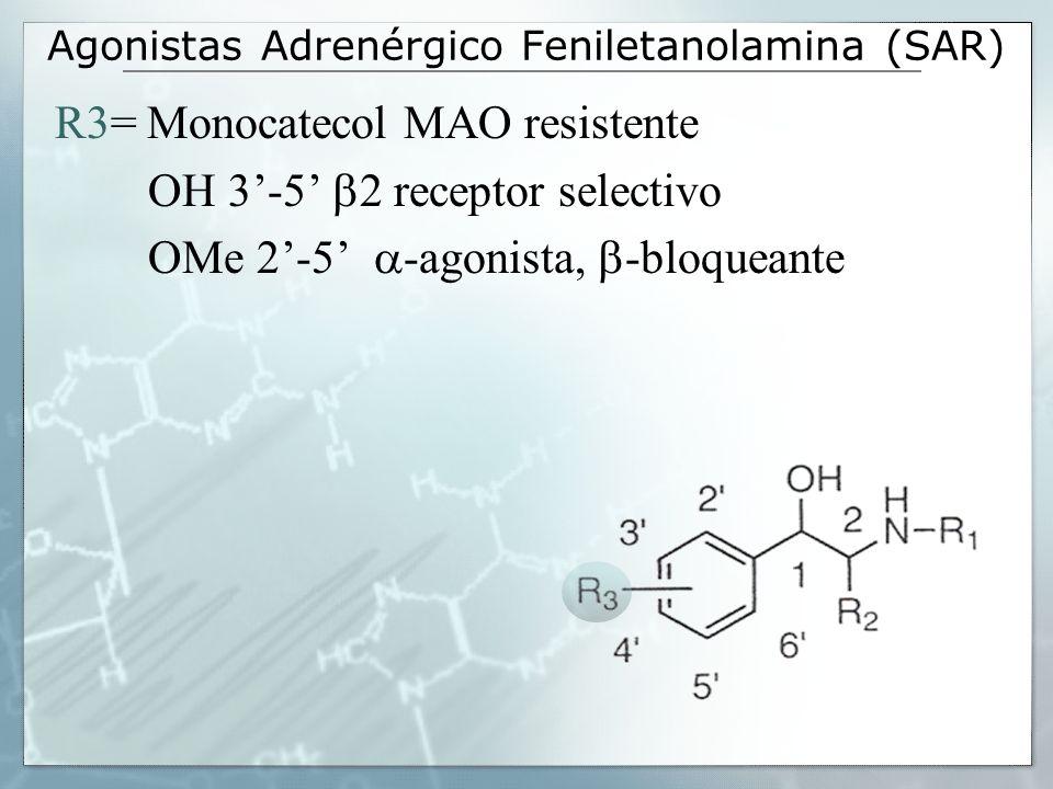Agonistas Adrenérgico Feniletanolamina (SAR) R3= Monocatecol MAO resistente OH 3-5 2 receptor selectivo OMe 2-5 -agonista, -bloqueante
