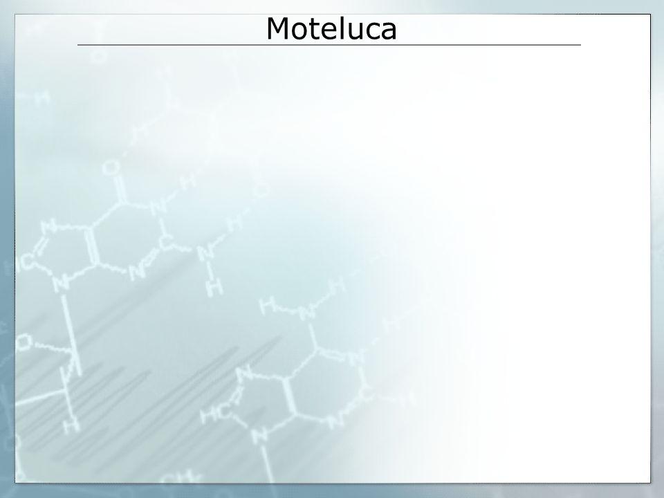 Moteluca
