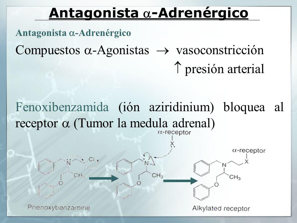 Antagonista -Adrenérgico Compuestos -Agonistas vasoconstricción presión arterial Fenoxibenzamida (ión aziridinium) bloquea al receptor (Tumor la medul