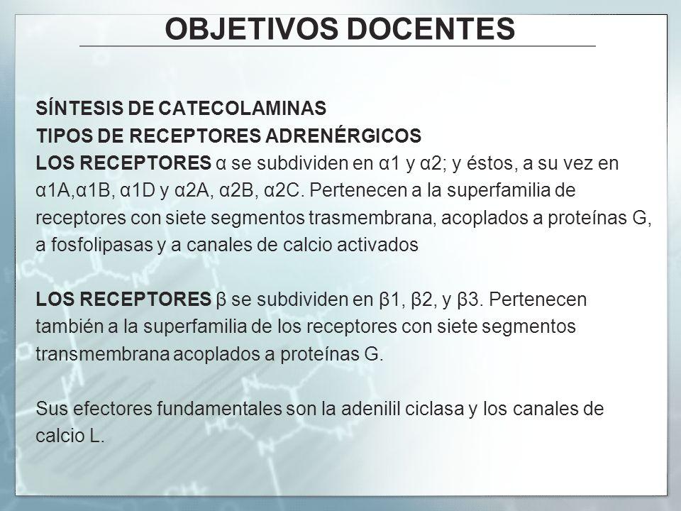 OBJETIVOS DOCENTES SÍNTESIS DE CATECOLAMINAS TIPOS DE RECEPTORES ADRENÉRGICOS LOS RECEPTORES α se subdividen en α1 y α2; y éstos, a su vez en α1A,α1B,