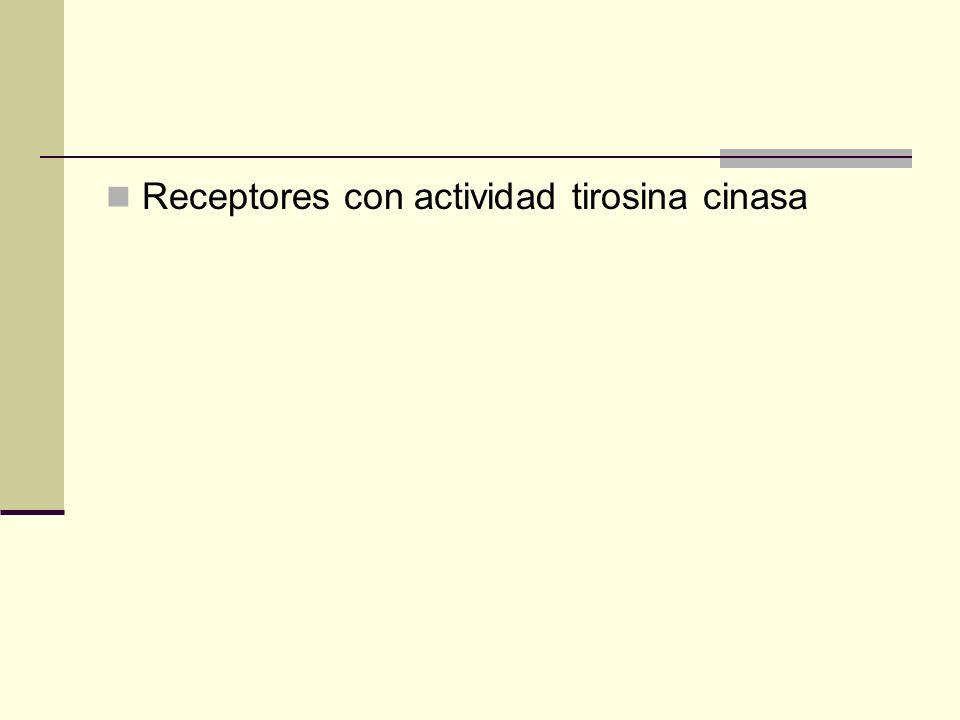 Receptores con actividad tirosina cinasa