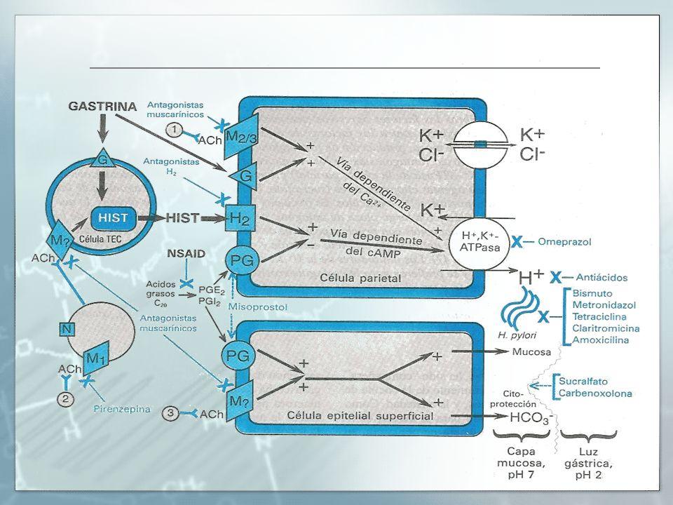 Prostaglandinas Regula a la Adenilato ciclasa en las células parietales