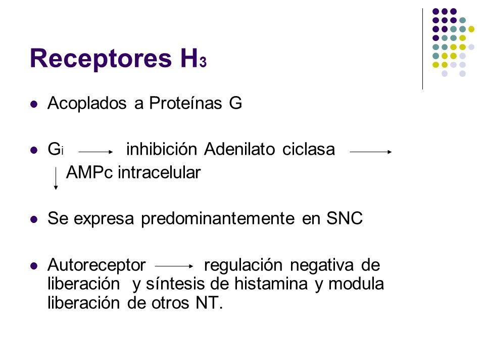 Receptores H 3 Acoplados a Proteínas G G i inhibición Adenilato ciclasa AMPc intracelular Se expresa predominantemente en SNC Autoreceptor regulación negativa de liberación y síntesis de histamina y modula liberación de otros NT.