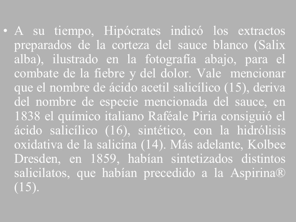 A su tiempo, Hipócrates indicó los extractos preparados de la corteza del sauce blanco (Salix alba), ilustrado en la fotografía abajo, para el combate