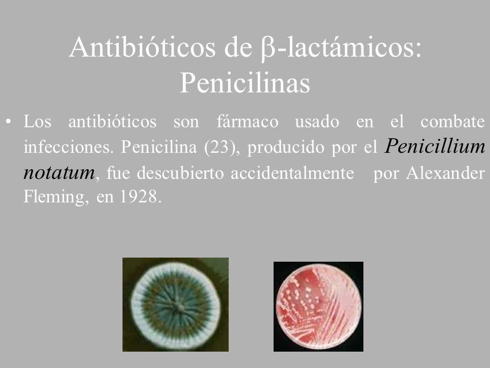 Antibióticos de -lactámicos: Penicilinas Los antibióticos son fármaco usado en el combate infecciones. Penicilina (23), producido por el Penicillium n