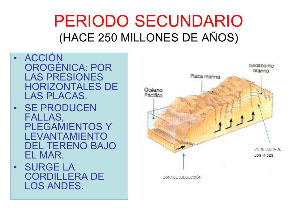 PERIODO SECUNDARIO (HACE 250 MILLONES DE AÑOS) ACCIÓN OROGÉNICA: POR LAS PRESIONES HORIZONTALES DE LAS PLACAS. SE PRODUCEN FALLAS, PLEGAMIENTOS Y LEVA