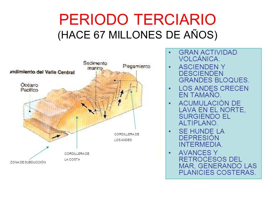 PERIODO TERCIARIO (HACE 67 MILLONES DE AÑOS) GRAN ACTIVIDAD VOLCÁNICA. ASCIENDEN Y DESCIENDEN GRANDES BLOQUES. LOS ANDES CRECEN EN TAMAÑO. ACUMULACIÓN
