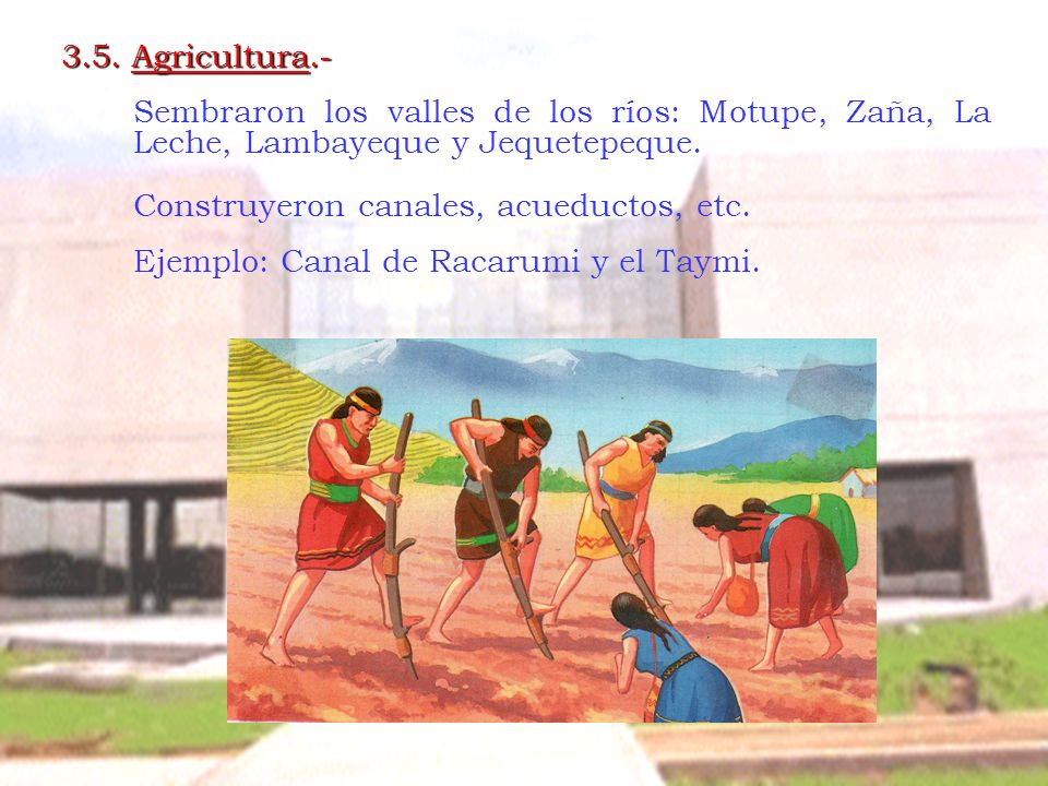3.5. Agricultura.- Sembraron los valles de los ríos: Motupe, Zaña, La Leche, Lambayeque y Jequetepeque. Construyeron canales, acueductos, etc. Ejemplo