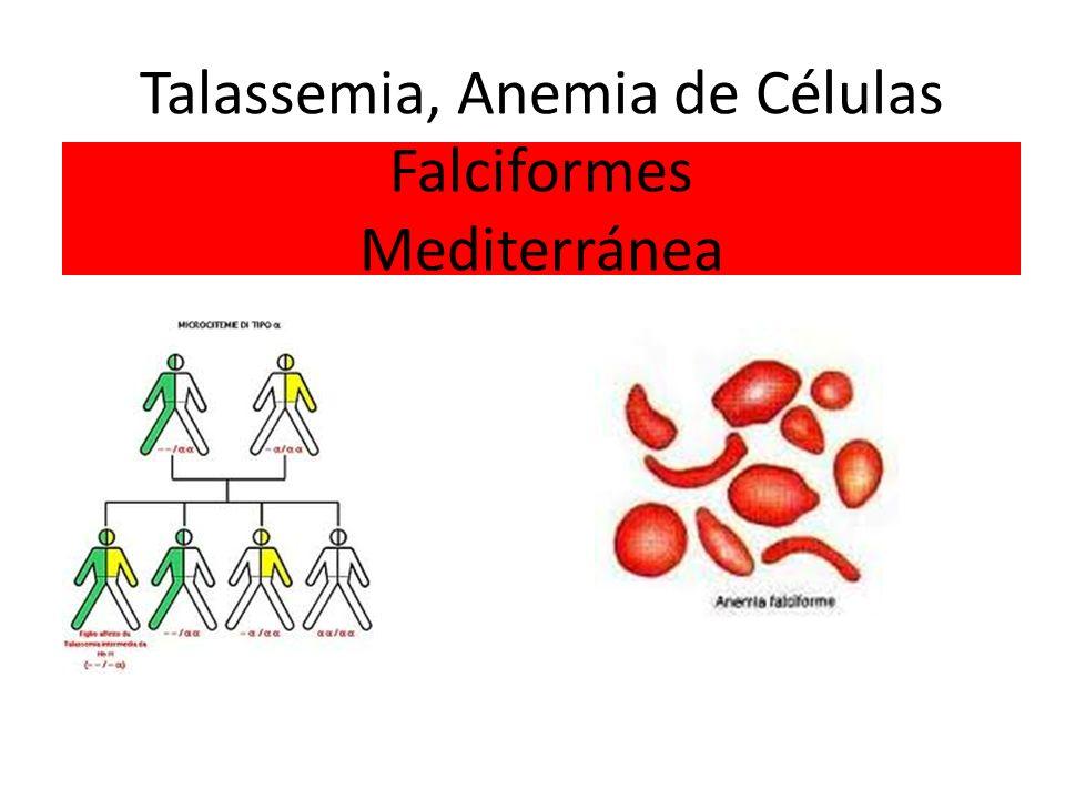Talassemia, Anemia de Células Falciformes Mediterránea