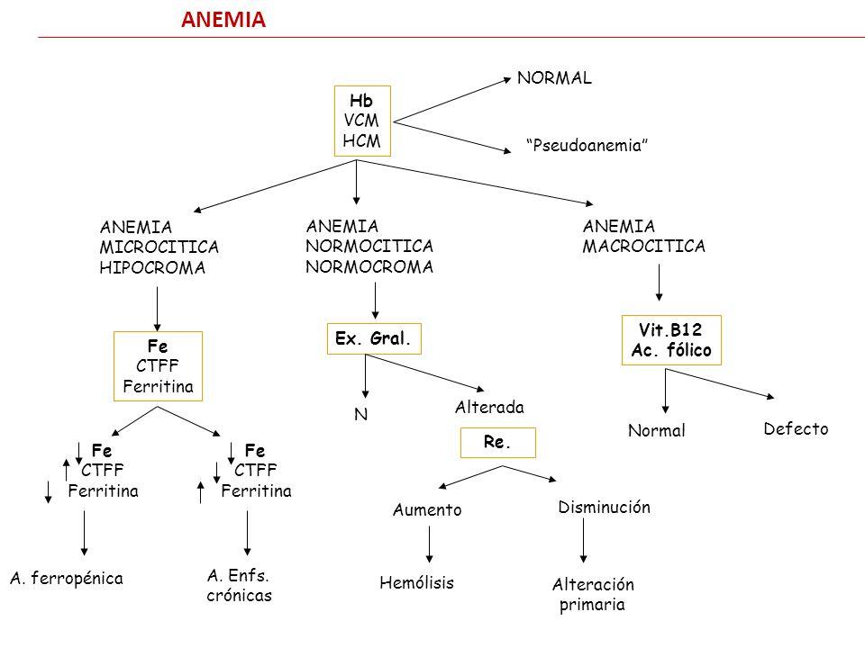 ANEMIA Hb VCM HCM NORMAL Pseudoanemia ANEMIA MICROCITICA HIPOCROMA Fe CTFF Ferritina ANEMIA NORMOCITICA NORMOCROMA Ex. Gral. ANEMIA MACROCITICA Vit.B1
