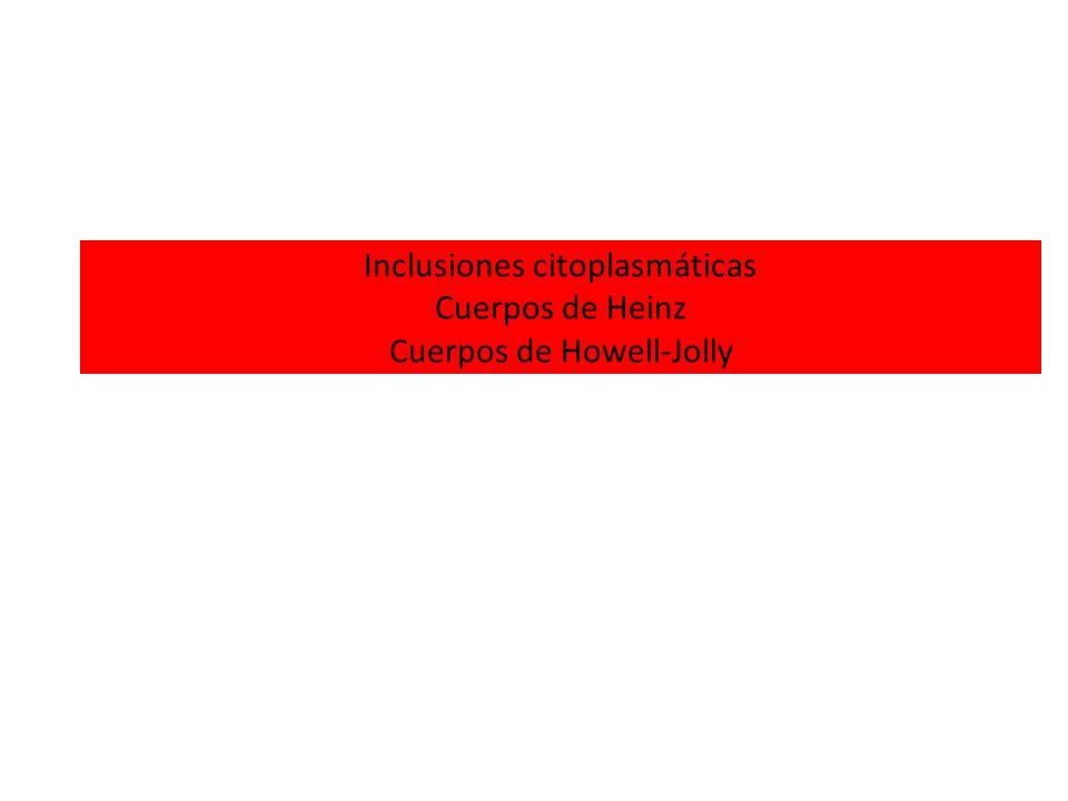 Inclusiones citoplasmáticas Cuerpos de Heinz Cuerpos de Howell-Jolly