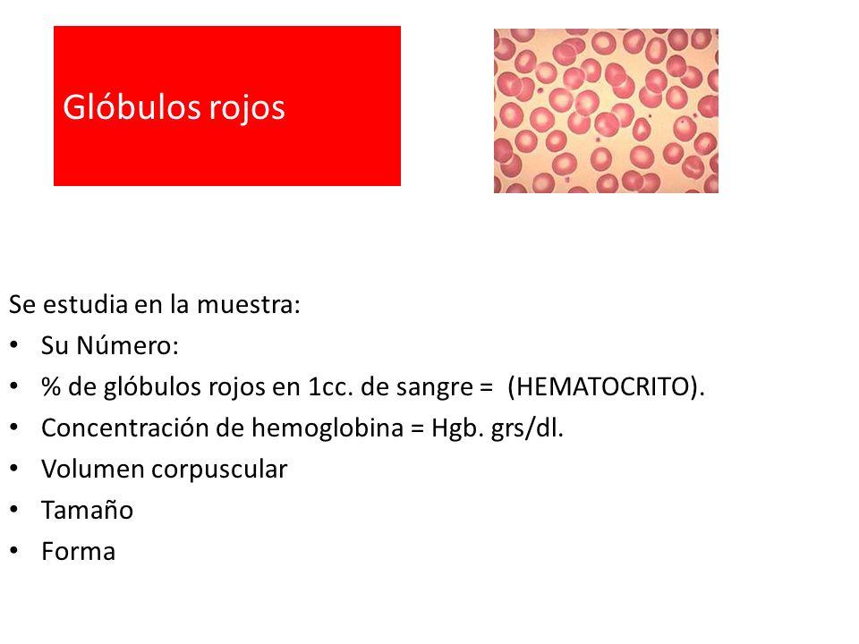 Glóbulos rojos Se estudia en la muestra: Su Número: % de glóbulos rojos en 1cc. de sangre = (HEMATOCRITO). Concentración de hemoglobina = Hgb. grs/dl.