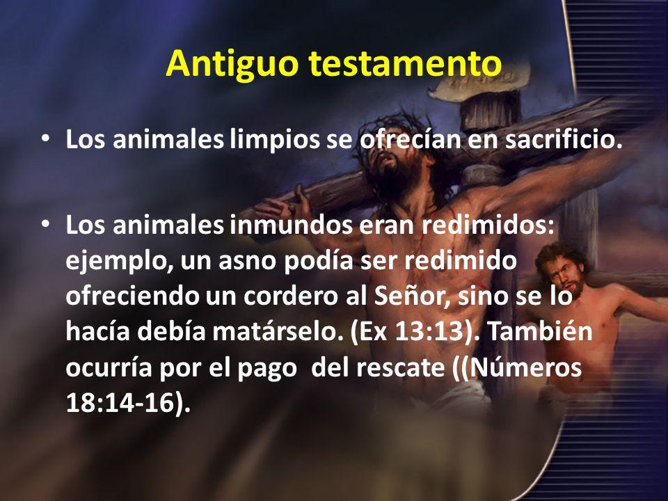 Antiguo testamento Los animales limpios se ofrecían en sacrificio. Los animales inmundos eran redimidos: ejemplo, un asno podía ser redimido ofreciend