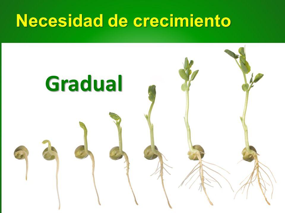 Necesidad de crecimiento Gradual