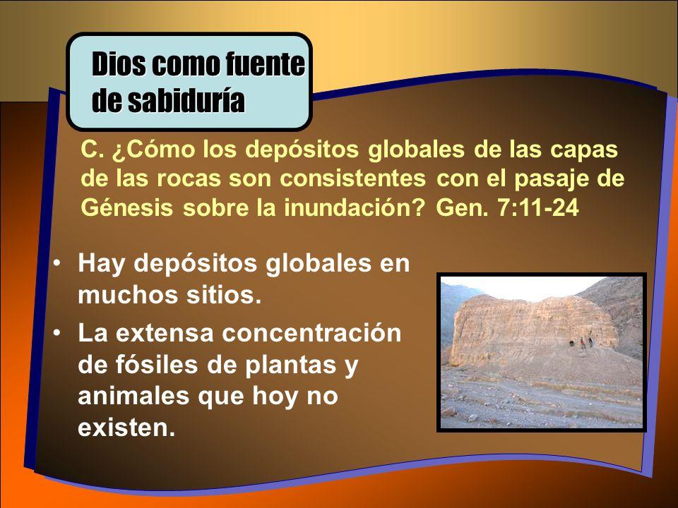 C. ¿Cómo los depósitos globales de las capas de las rocas son consistentes con el pasaje de Génesis sobre la inundación? Gen. 7:11-24 Hay depósitos gl