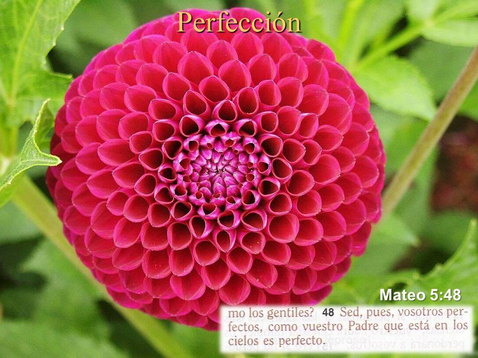 Perfección Palabras de Jesús Palabras de Jesús Sed, pues, vosotros perfectos, como vuestro Padre que está en los cielos es perfecto (Mat.