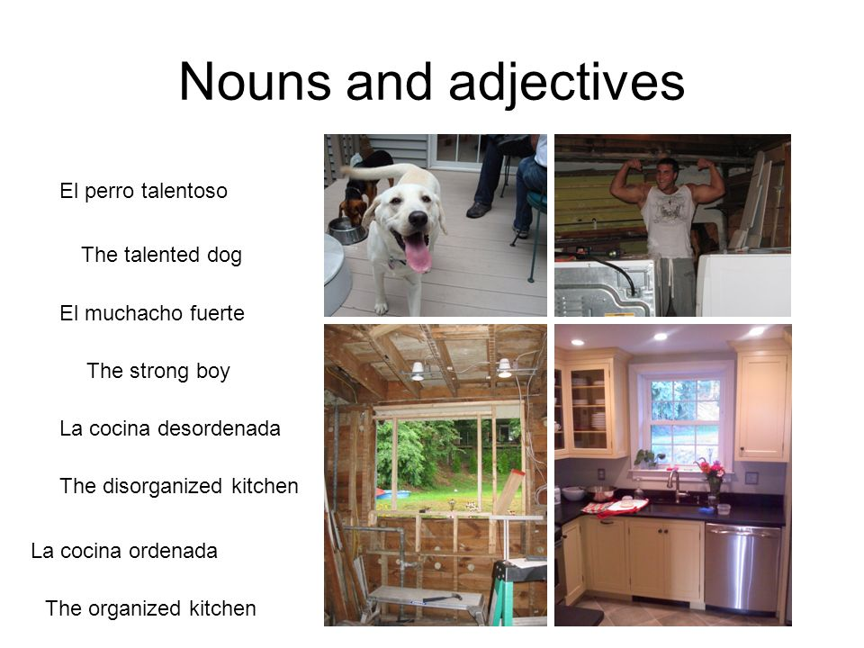 Nouns and adjectives El perro talentoso El muchacho fuerte The talented dog The strong boy La cocina desordenada The disorganized kitchen La cocina ordenada The organized kitchen
