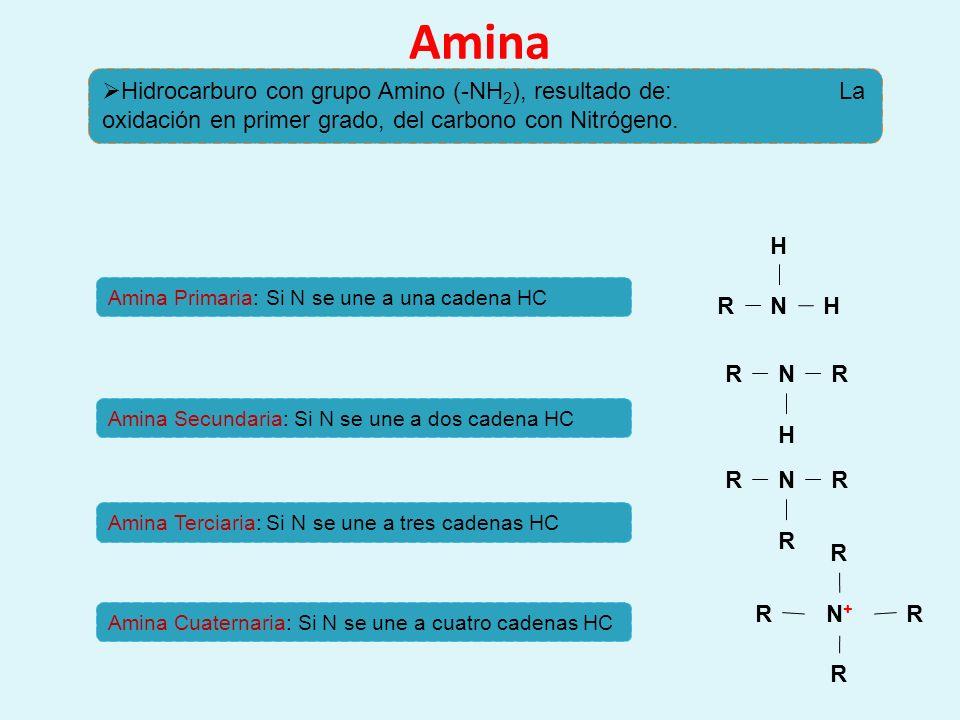 Amina Hidrocarburo con grupo Amino (-NH 2 ), resultado de: La oxidación en primer grado, del carbono con Nitrógeno. N H R H NR H R NR R R N+N+ R R R R