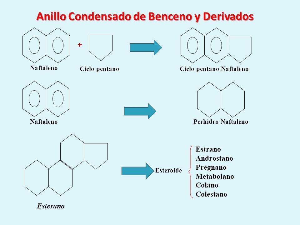 Anillo Condensado de Benceno y Derivados Naftaleno Esterano + Ciclo pentanoCiclo pentano Naftaleno NaftalenoPerhidro Naftaleno Esteroide Estrano Andro
