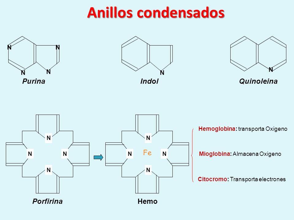 Anillos condensados N N N NN N PurinaIndolQuinoleina N NN N Porfirina N NN N Fe Hemo Hemoglobina: transporta Oxigeno Mioglobina: Almacena Oxigeno Cito