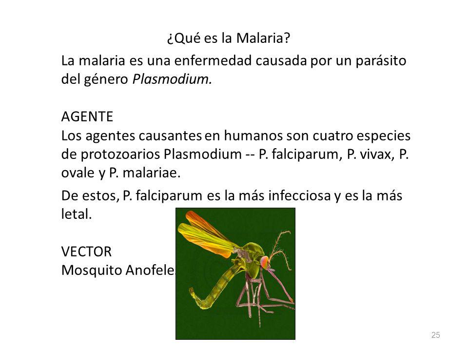 ¿Qué es la Malaria? La malaria es una enfermedad causada por un parásito del género Plasmodium. AGENTE Los agentes causantes en humanos son cuatro esp