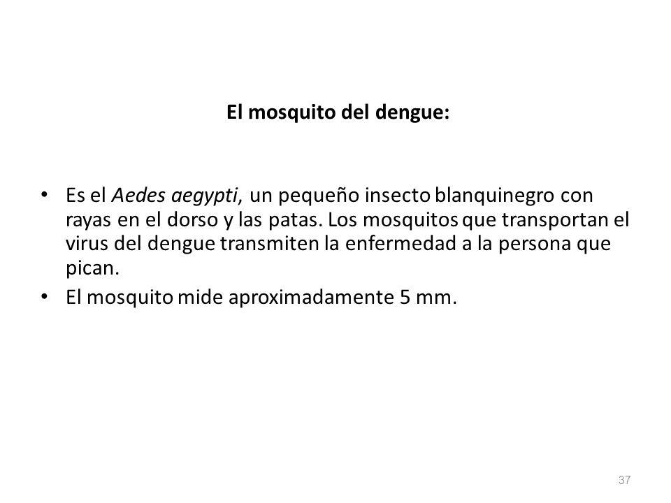 El mosquito del dengue: Es el Aedes aegypti, un pequeño insecto blanquinegro con rayas en el dorso y las patas. Los mosquitos que transportan el virus