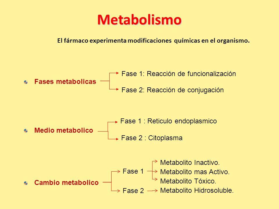 Metabolismo El fármaco experimenta modificaciones químicas en el organismo.