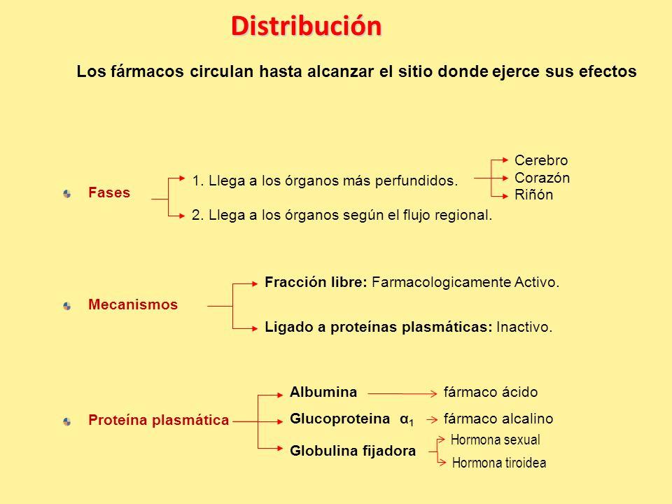 Distribución Los fármacos circulan hasta alcanzar el sitio donde ejerce sus efectos Fases Mecanismos 1.