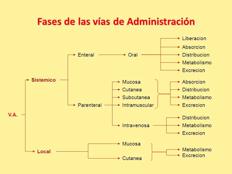 Fases de las vías de Administración V.A.