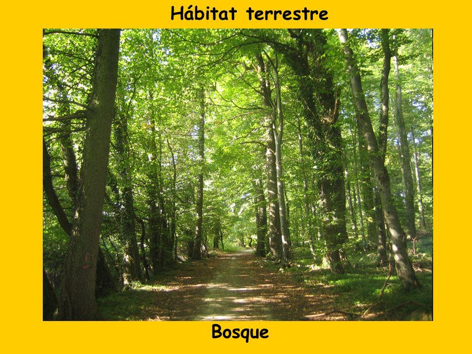 Bosque Hábitat terrestre