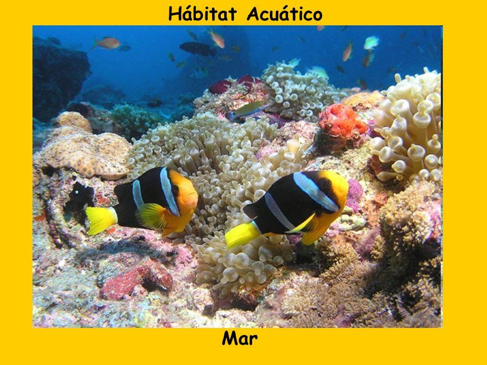 Hábitat Acuático Mar