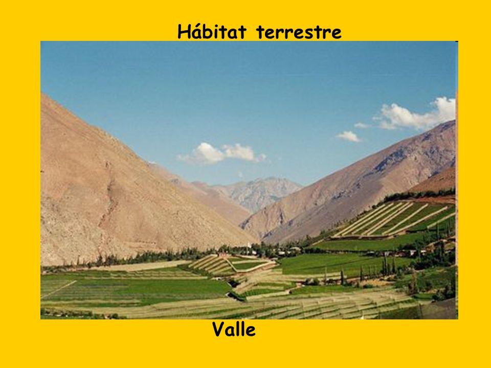 Hábitat terrestre Valle