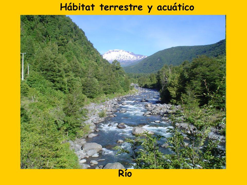 Hábitat terrestre y acuático Río