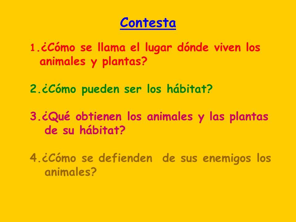 Contesta 1.¿Cómo se llama el lugar dónde viven los animales y plantas? 2.¿Cómo pueden ser los hábitat? 3.¿Qué obtienen los animales y las plantas de s