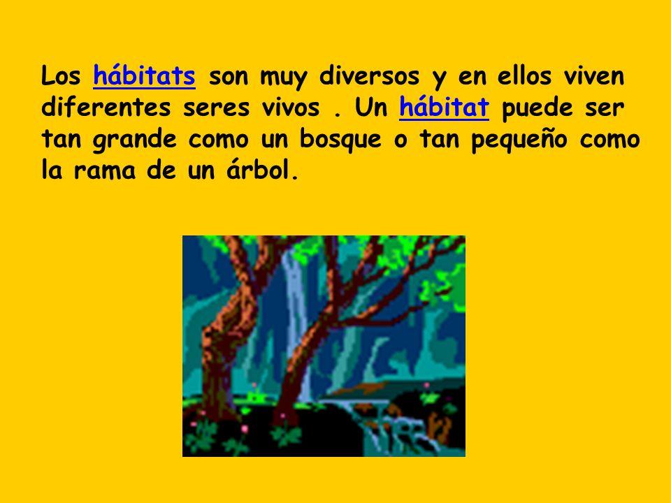 Los hábitats son muy diversos y en ellos viven diferentes seres vivos. Un hábitat puede ser tan grande como un bosque o tan pequeño como la rama de un
