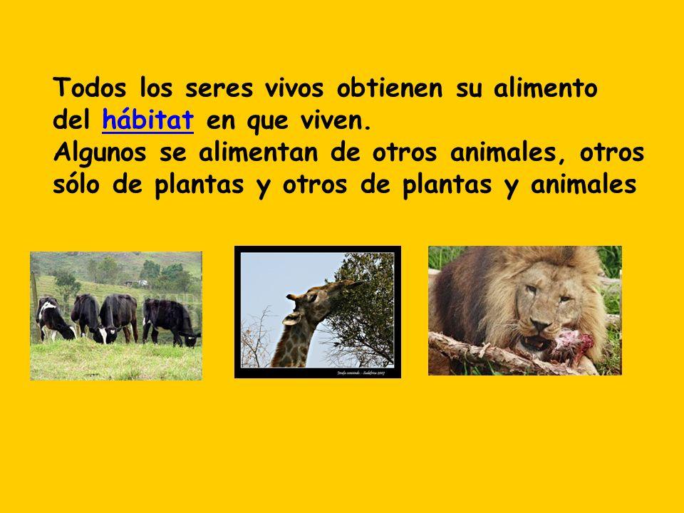 Todos los seres vivos obtienen su alimento del hábitat en que viven. Algunos se alimentan de otros animales, otros sólo de plantas y otros de plantas