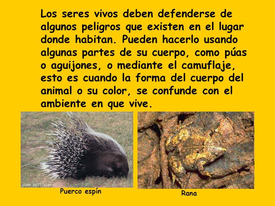 Los seres vivos deben defenderse de algunos peligros que existen en el lugar donde habitan. Pueden hacerlo usando algunas partes de su cuerpo, como pú