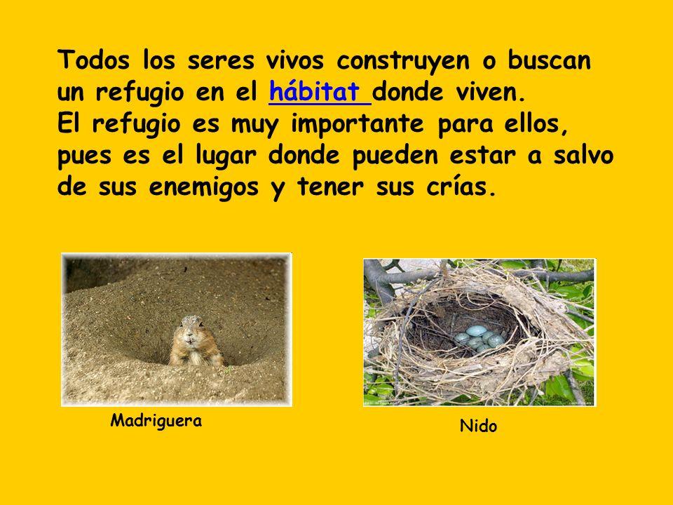 Todos los seres vivos construyen o buscan un refugio en el hábitat donde viven. El refugio es muy importante para ellos, pues es el lugar donde pueden