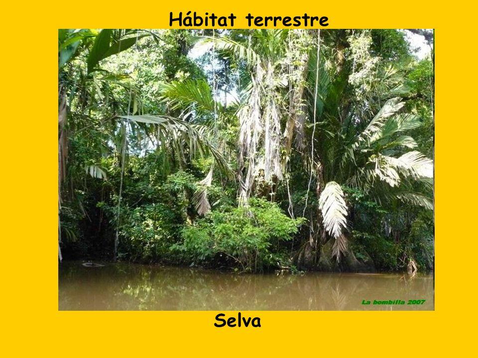 Selva Hábitat terrestre