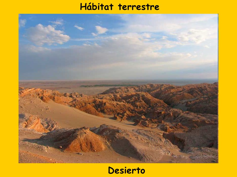 Desierto Hábitat terrestre