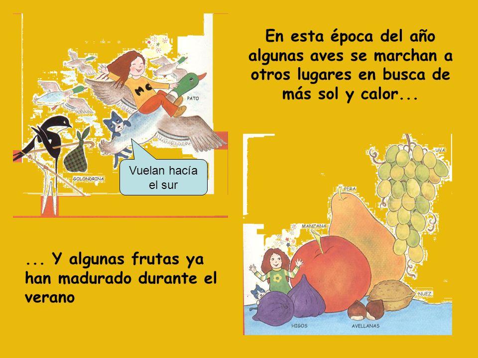 Las hojas de los árboles se vuelven amarillas y caen. En otoño los bosques son de color dorado.