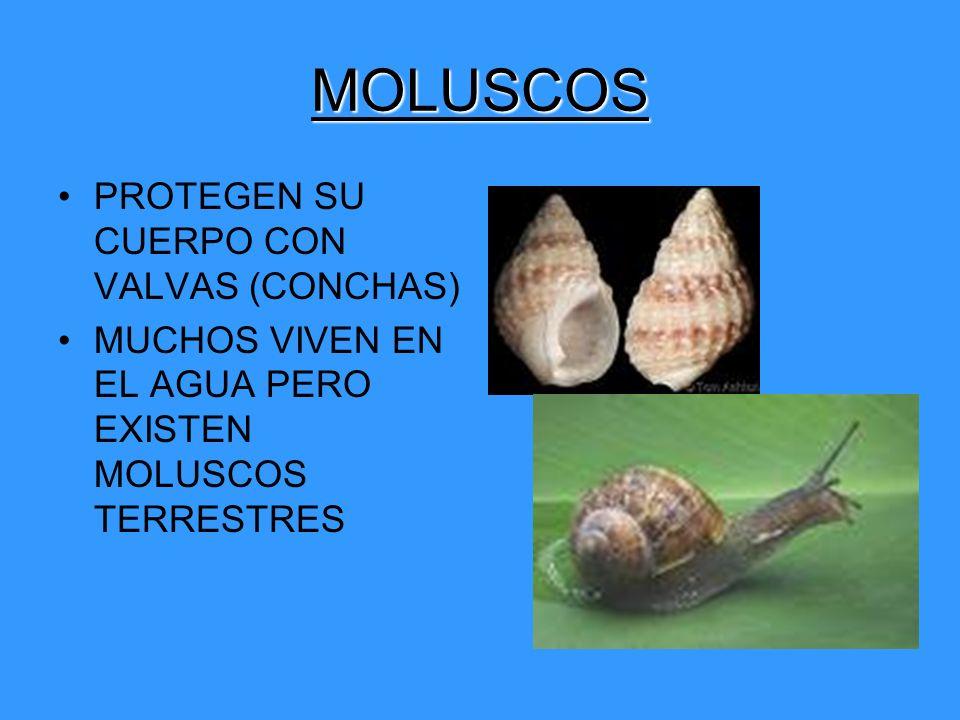 MOLUSCOS PROTEGEN SU CUERPO CON VALVAS (CONCHAS) MUCHOS VIVEN EN EL AGUA PERO EXISTEN MOLUSCOS TERRESTRES