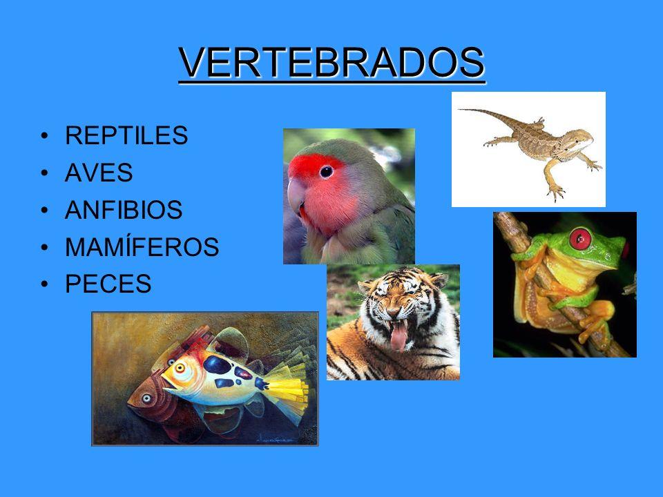REPTILES ANIMALES TERRESTRES.PIEL CON ESCAMAS SOLDADAS.