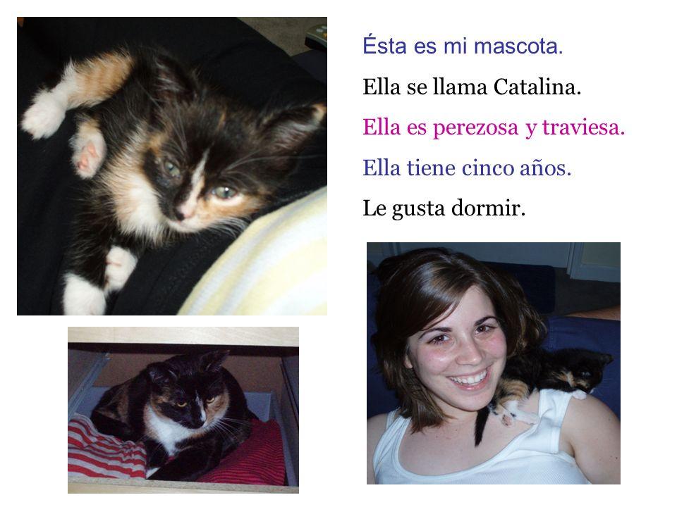 Ésta es mi mascota. Ella se llama Catalina. Ella es perezosa y traviesa. Ella tiene cinco años. Le gusta dormir.
